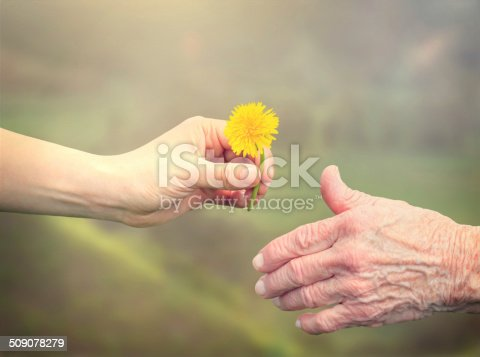 istock Senior woman sharing a flower with young girl 509078279