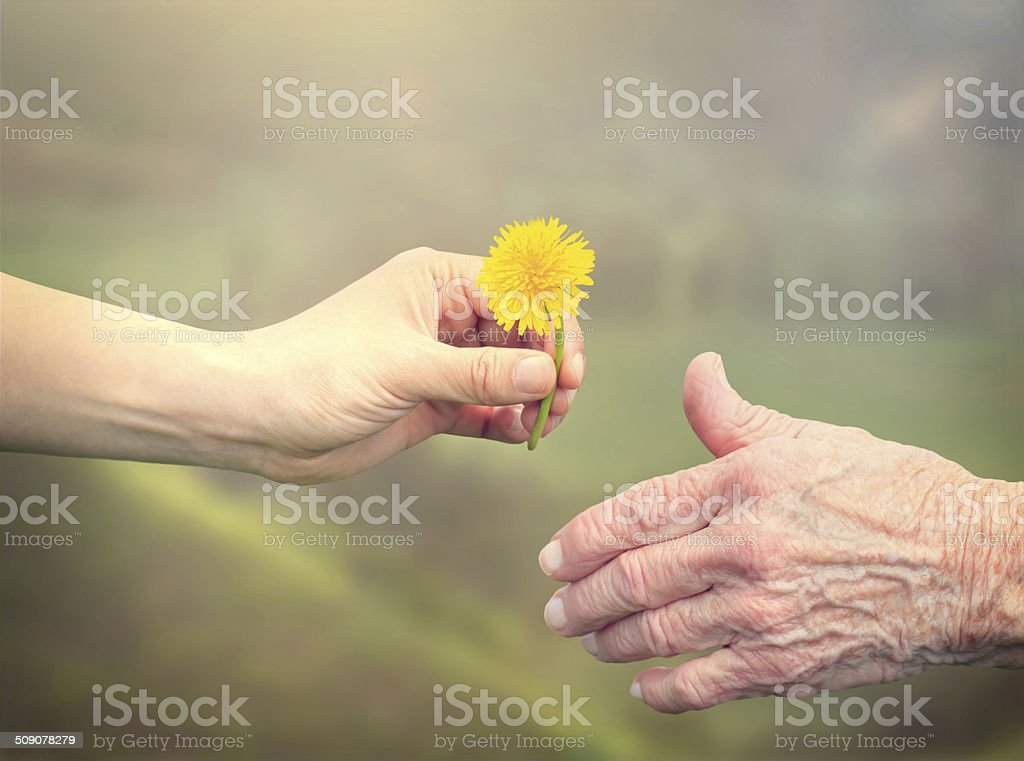 Senior woman sharing a flower with young girl stock photo