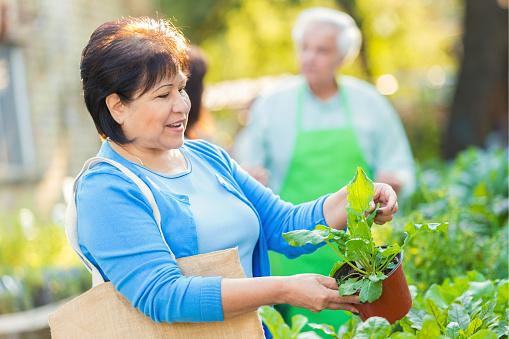 istock Senior woman shopping for plants in gardening store 493057678