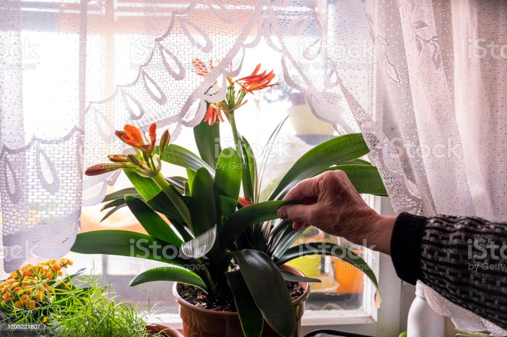 how to take care of stock flowers