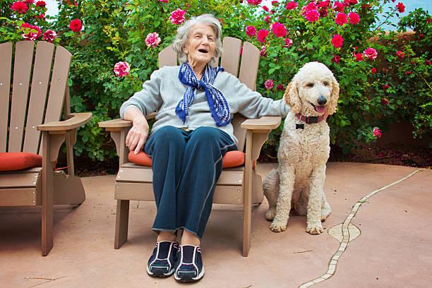 senior frau sprechen mit service hund - dressierter hund stock-fotos und bilder