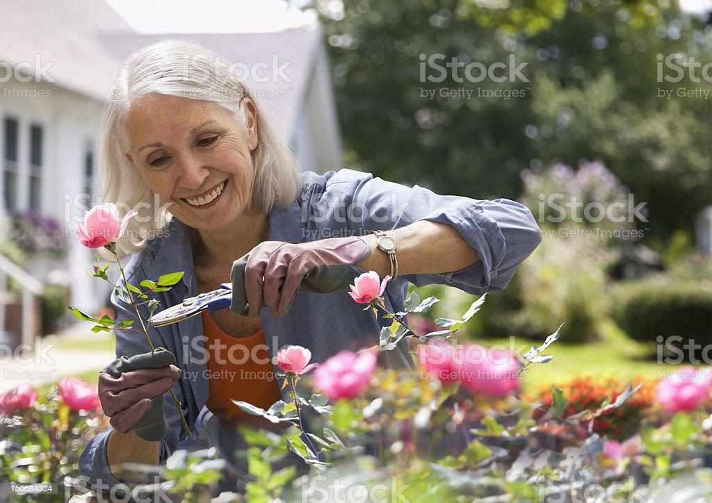 Senior woman trimming flowers stock photo
