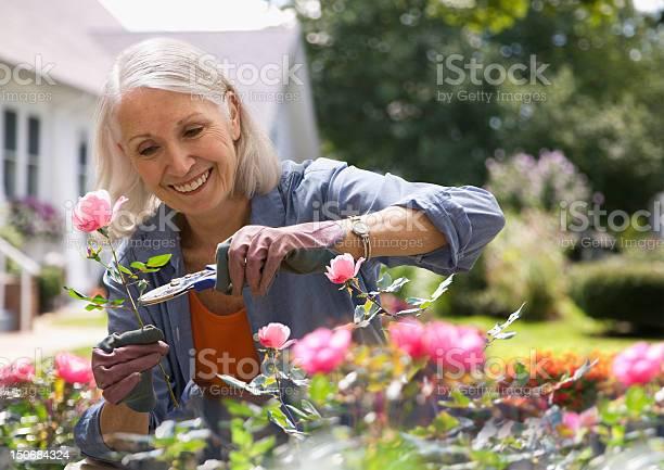 잘라내기를 여자 노인 꽃 65-69세에 대한 스톡 사진 및 기타 이미지