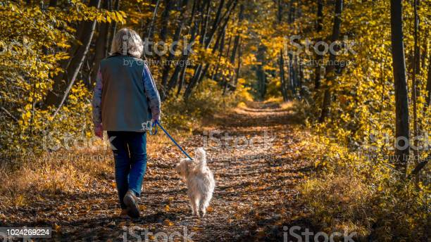 Senior woman walking a dog on a forest trail during a late afternoon picture id1024269224?b=1&k=6&m=1024269224&s=612x612&h=szq5bbh nn aihtt i81rzdkb7ts9kab3fueupf4g w=