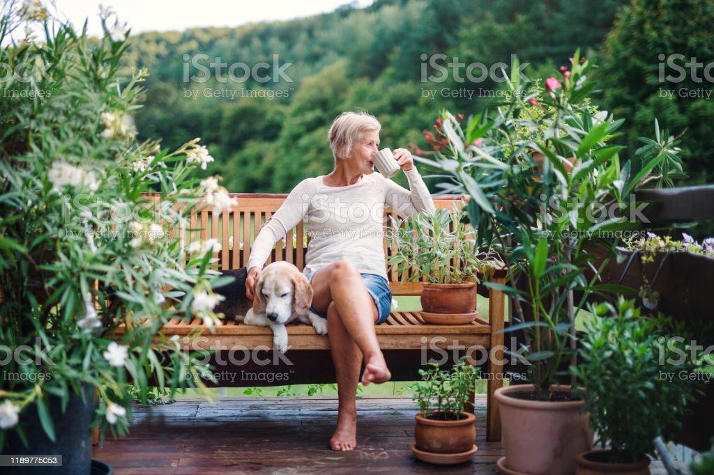 夏天,一位帶著狗和咖啡的年長婦女坐在戶外的露臺上。 - 免版稅一個人圖庫照片