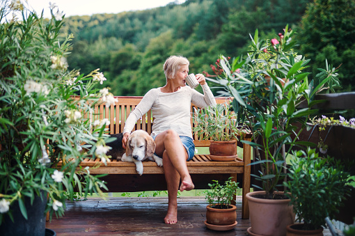 A senior woman with a dog and coffee sitting outdoors on a terrace in summer.
