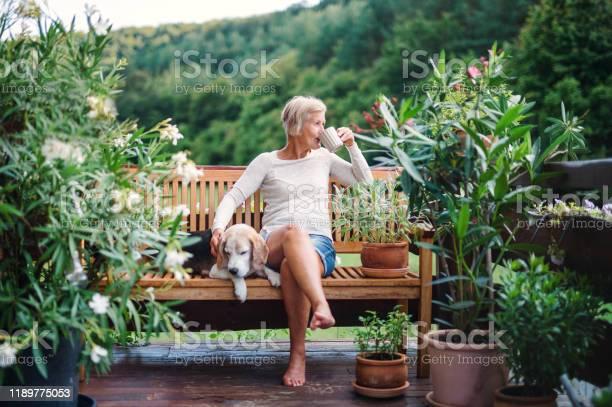 Een Senior Vrouw Met Een Hond En Koffie Buiten Zitten Op Een Terras In De Zomer Stockfoto en meer beelden van Alleen volwassenen