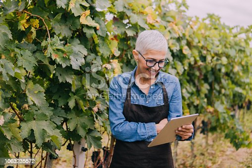 1063236916 istock photo Senior woman with a tablet in a vineyard 1063235572
