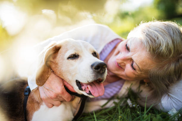 Senior woman with dog in spring nature, resting. stock photo
