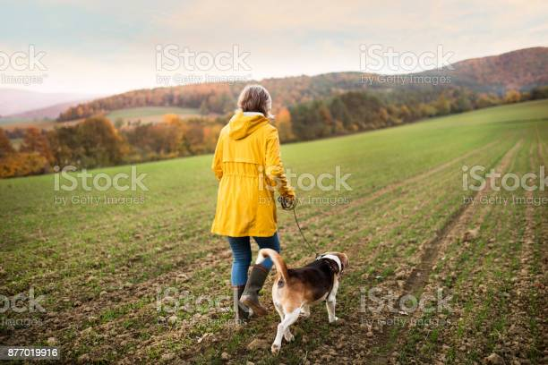 Senior woman with dog on a walk in an autumn nature picture id877019916?b=1&k=6&m=877019916&s=612x612&h=hoox8ctzkdosjkcbjnuj aldxdgowizp raw9ohtth0=