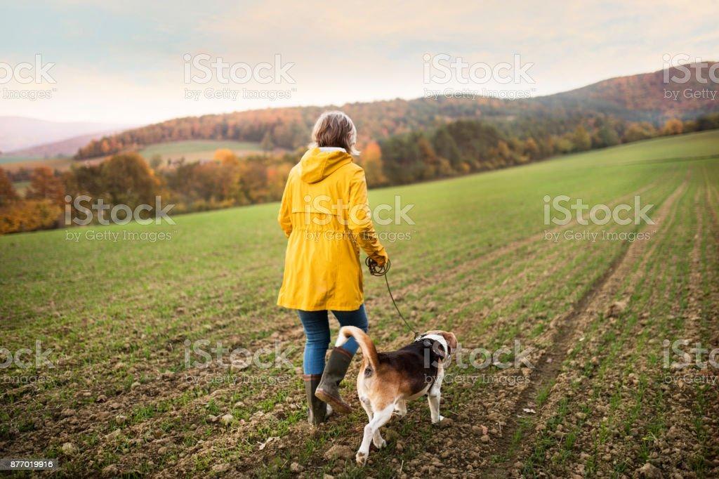 Ältere Frau mit Hund auf einem Spaziergang in einer herbstlichen Natur. – Foto