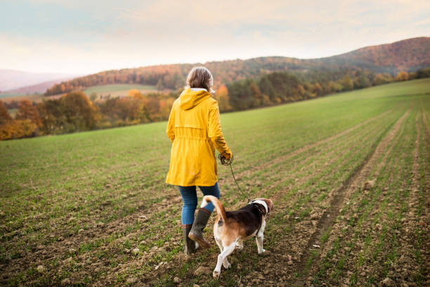 senior kvinna med hund på en promenad i en höst natur. - single pampas grass bildbanksfoton och bilder