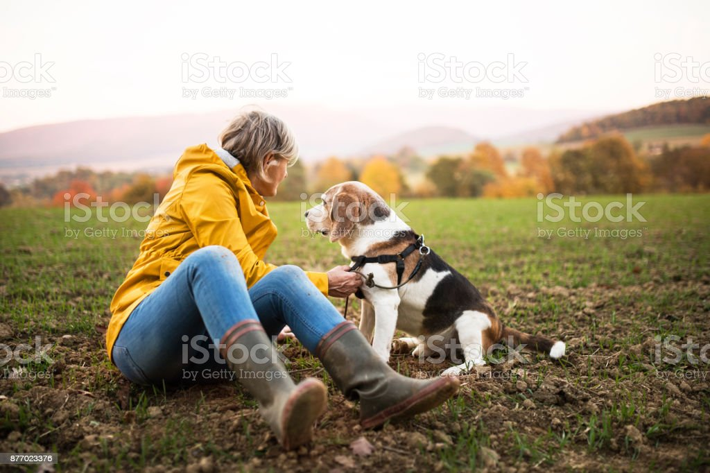 Senior woman with dog on a walk in an autumn nature. stock photo
