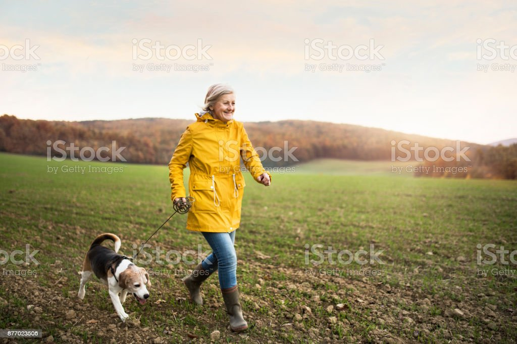 Senior woman with dog on a walk in an autumn nature. royalty-free stock photo