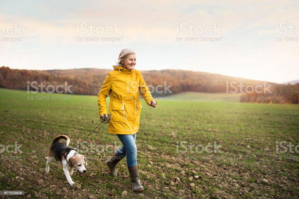 秋の自然の中の散歩に犬を年配の女性。 ロイヤリティフリーストックフォト