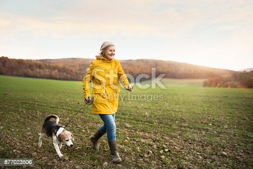 istock Senior woman with dog on a walk in an autumn nature. 877023506