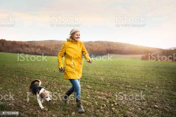 Senior woman with dog on a walk in an autumn nature picture id877023506?b=1&k=6&m=877023506&s=612x612&h=ycuix9hppqvuhwa1idcvu5t zjc97a6yvmvwjfviini=