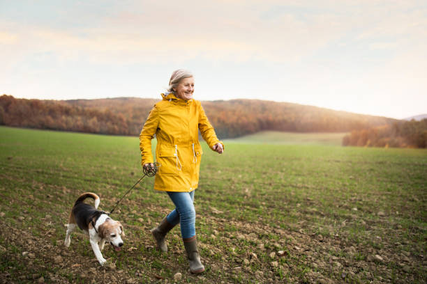senior woman with dog on a walk in an autumn nature. - walking zdjęcia i obrazy z banku zdjęć