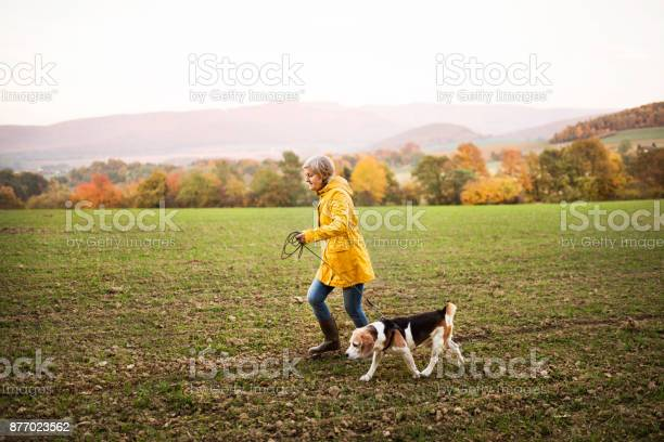 Senior woman with dog on a walk in an autumn nature picture id877023562?b=1&k=6&m=877023562&s=612x612&h=to2nr2p9p6sm zqmn8sw1uimn1hhkju69ze 759kips=