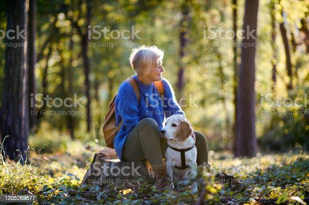 Senior woman with dog on a walk outdoors in forest resting picture id1205269577?b=1&k=6&m=1205269577&s=612x612&h=1 jdyphj0yj0dxuwqreuvj53y6ckhgrci0zeaokl1ko=