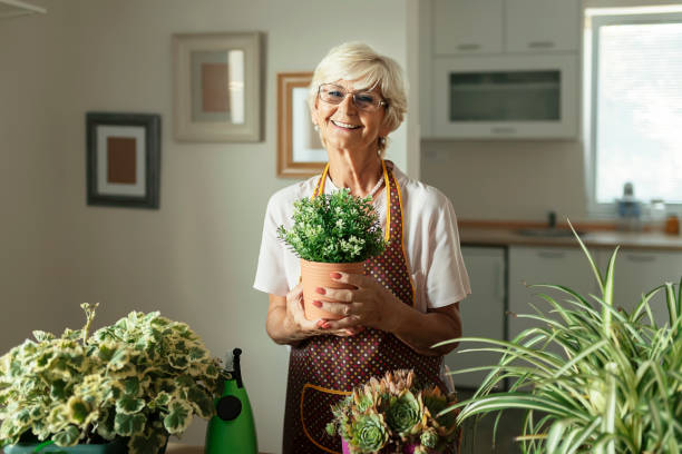 Senior Woman With Green Plants and Flowers Looking at Camera Portrait of Happy Senior Woman With Green Plants and Flowers Looking at Camera potting stock pictures, royalty-free photos & images