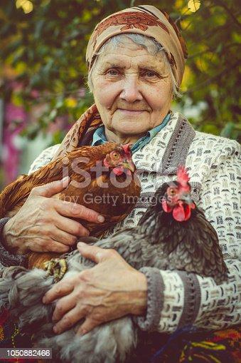 Senior farmer with her hens on farm in summer
