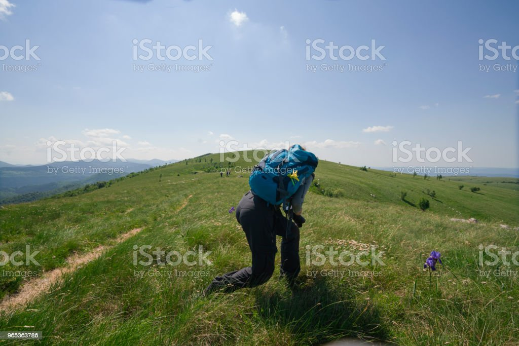 Senior woman with small backpack is enjoying blooming flowers on rock, Zalipnik plain in Slovenia zbiór zdjęć royalty-free