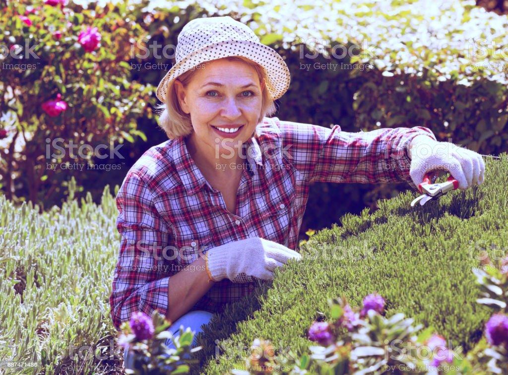 Senior woman working in the garden stock photo