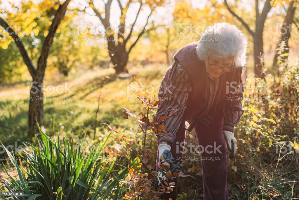 Senior woman working in the garden with plants and flowers stock photo