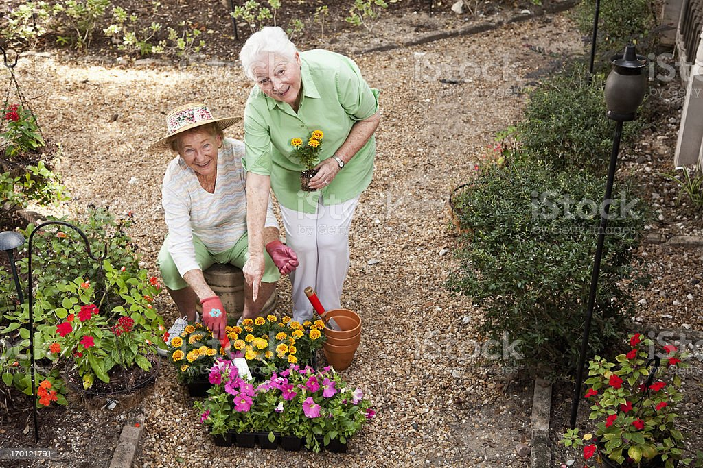 Senior women gardening royalty-free stock photo