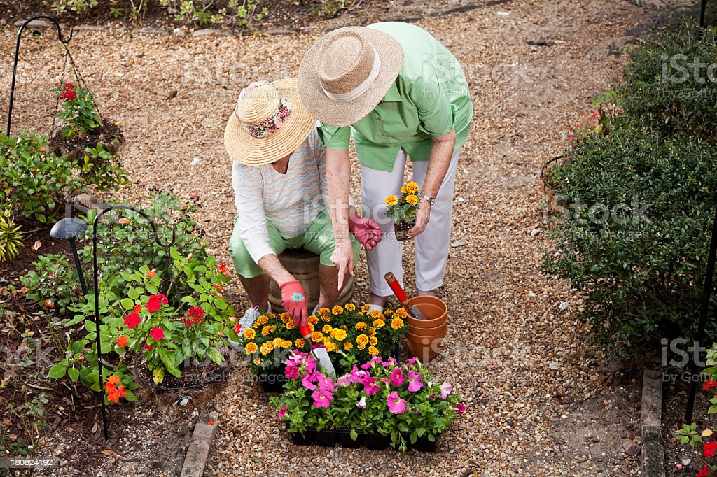 Senior women gardening stock photo