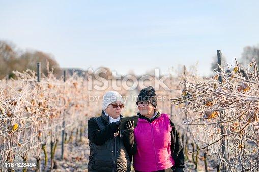 1063236916 istock photo Senior women using digital tablet on a vineyard 1187823494