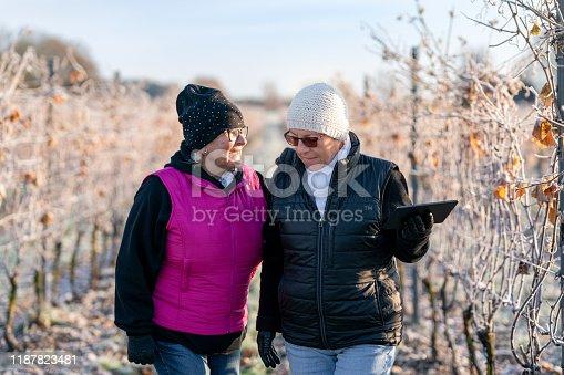 1063236916 istock photo Senior women working on a vineyard 1187823481