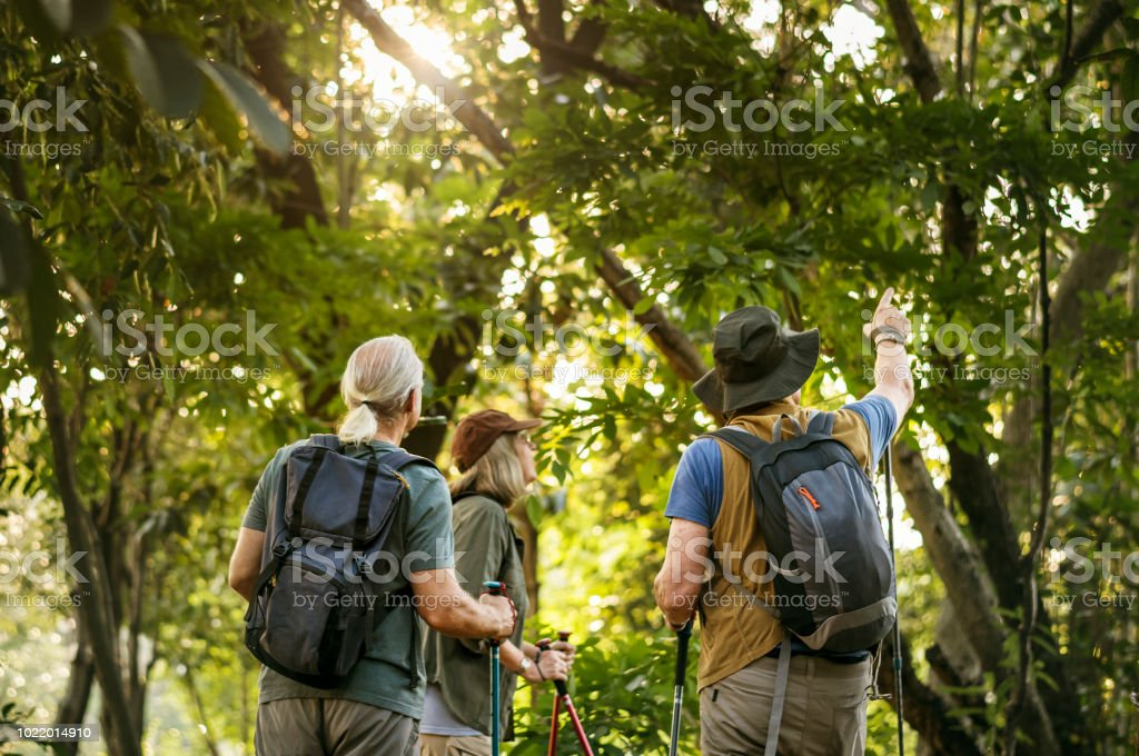 Seniors trekking in a forest stock photo