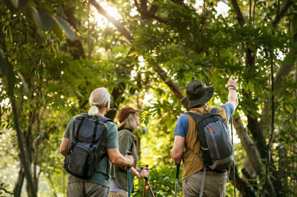 Seniors trekking in a forest stock photo