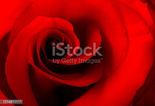 A sensual slightly grainy rose image