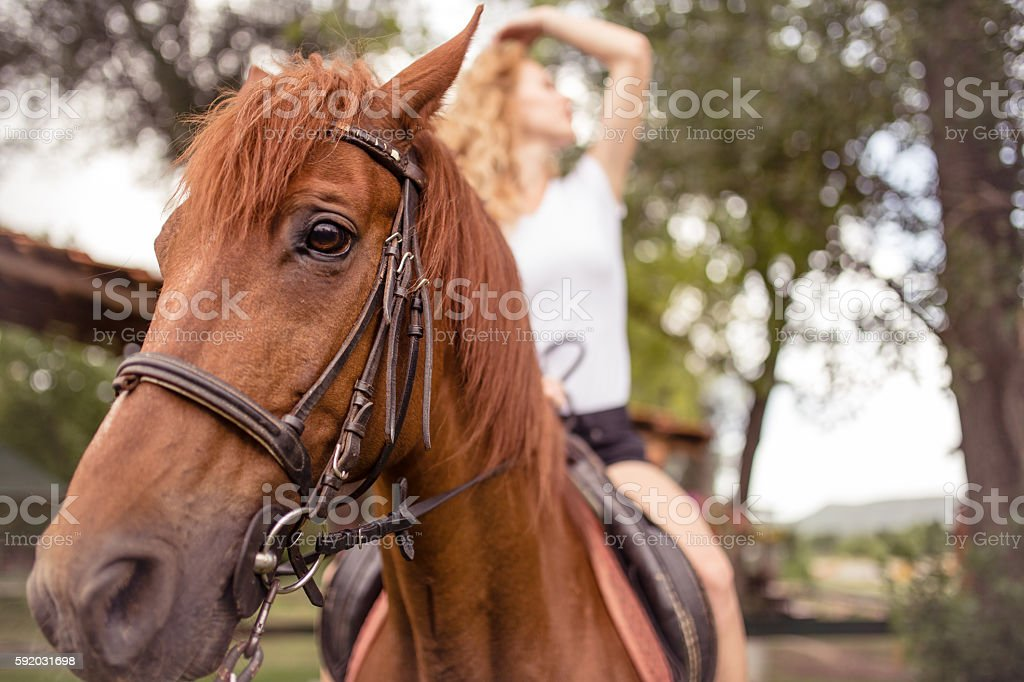 Sensual woman on a horse stock photo