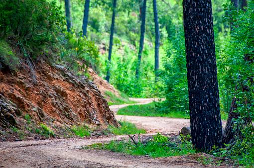 Sentier De Randonnée En Corse 고독-개념에 대한 스톡 사진 및 기타 이미지