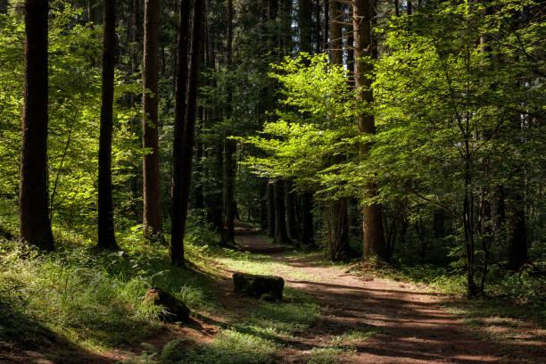sentiero nel bosco giochi di luce e ombre  sul sentiero  nel bosco percorso stock pictures, royalty-free photos & images
