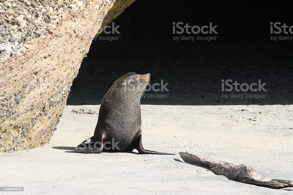 Sentinel at the guard-post stock photo