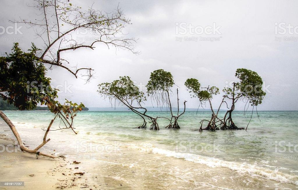 Sentinel Mangrove Trees Shoreline Andaman sea stock photo