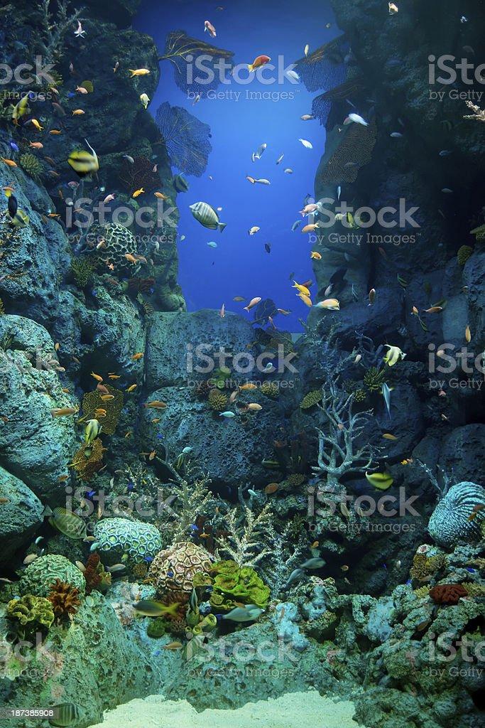 Sentosa Aquarium stock photo