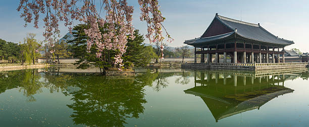 Seoul spring blossom over Gyeongbokgung pavillion reflecting lake panorama Korea stock photo