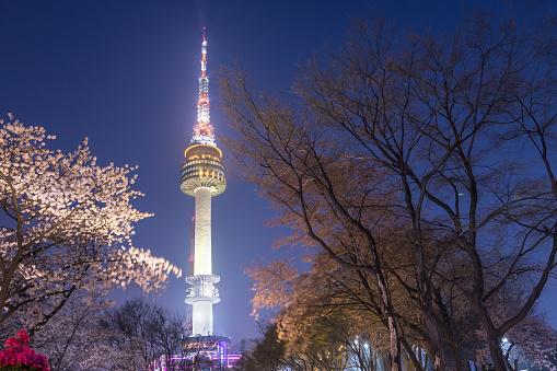 桜の木韓国で春の夜景でソウル市のソウル タワー - Nソウルタワーのストックフォトや画像を多数ご用意
