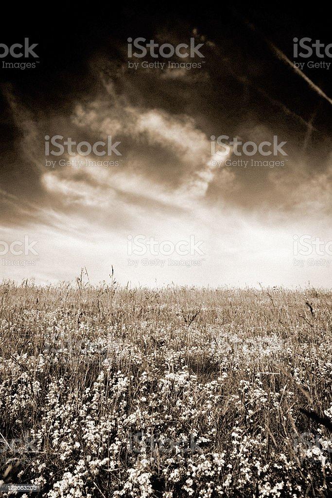 Sepia Farmland royalty-free stock photo