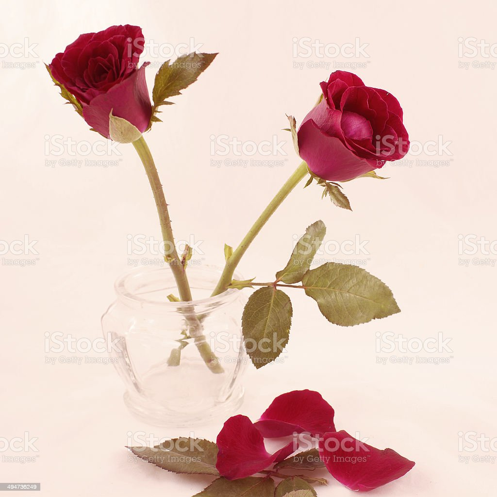 Sepia filtered roses stock photo