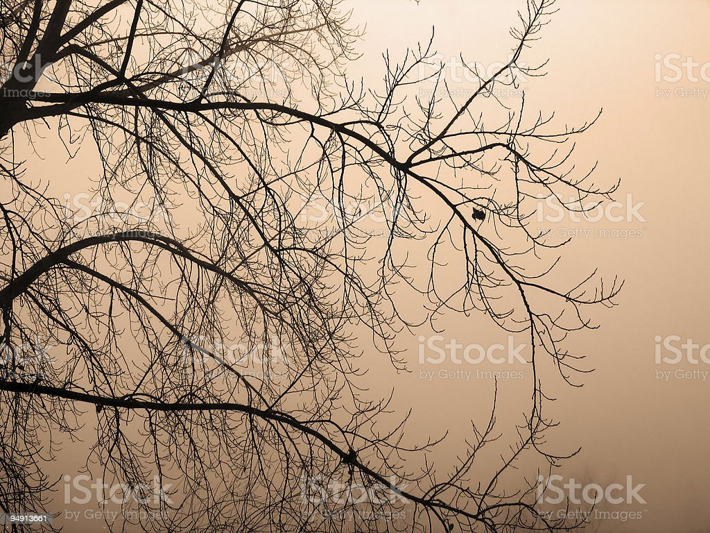Sepia Forest Fog royalty-free stock photo