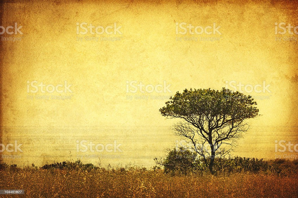 Sepia Grunge Tree royalty-free stock photo