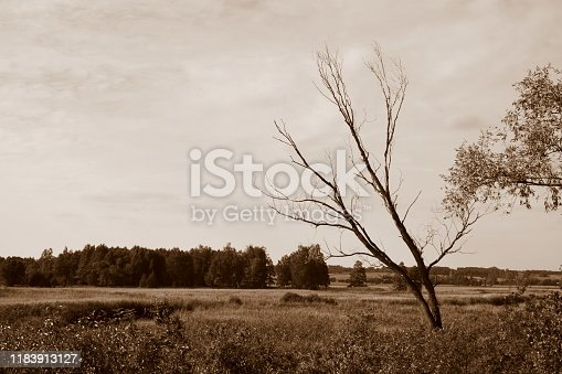 Sepia photo of a vast field, meadow or pastureland with a single angled dry decideous tree growing in the middle of it and with some forest or moor visible in the distance on a cloudy summer day