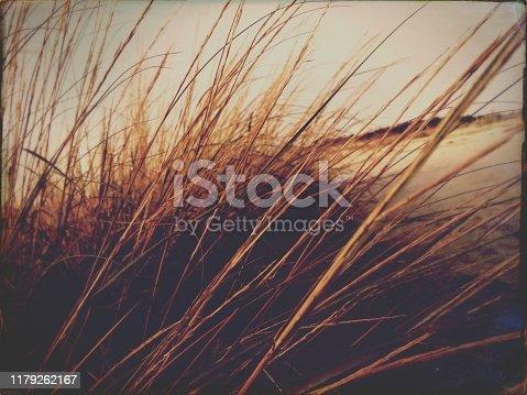 Sepia Tone Sea Grass